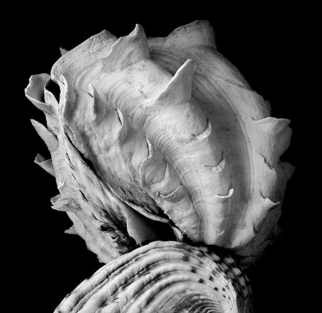 Mounted Shell