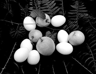 Apples-Eggs-Wild Ferns