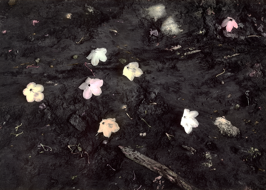 Blooms On Clay_Tinted