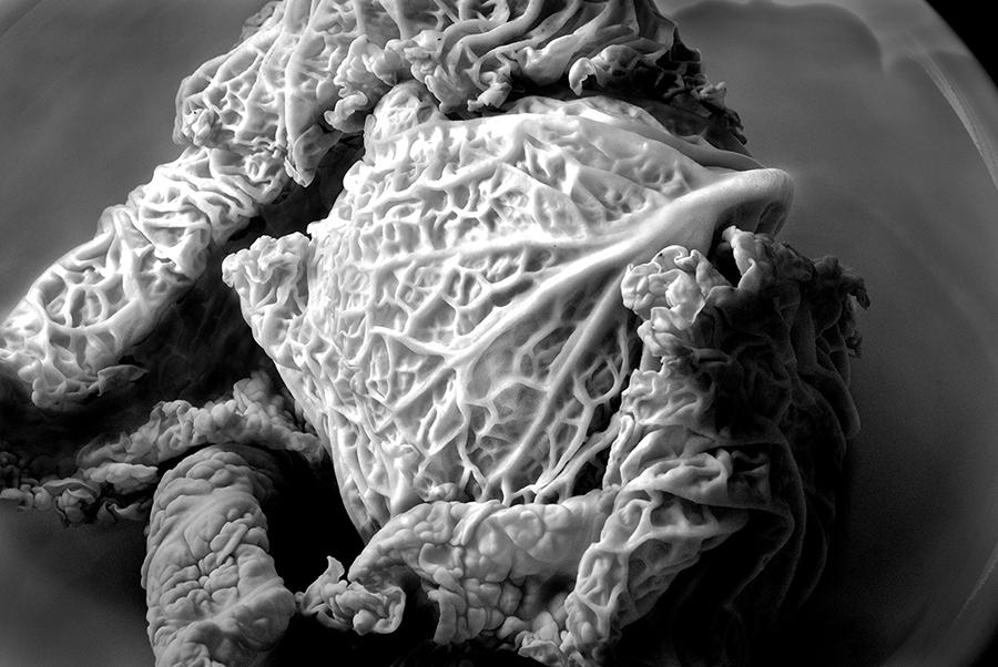 Cabbage Head_900