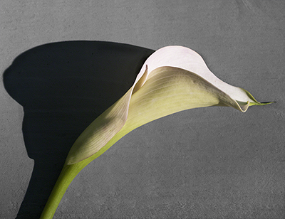 Calla Profile-Color