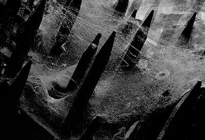 Cosmic Web