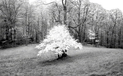 Dogwood-Pisgah Meadow