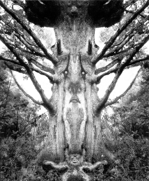 Father Tree 1
