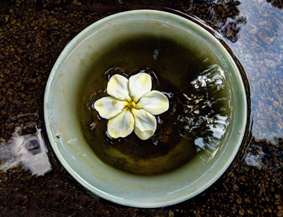 Floating Gardenia