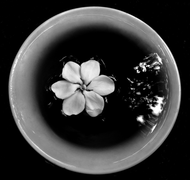 Floating Gardenia 2