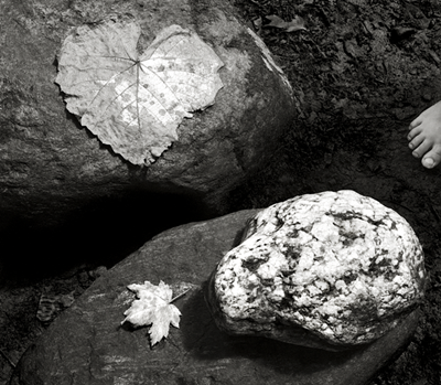 Leaves, Stones and Toes