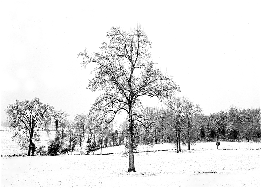 Carolina Winter