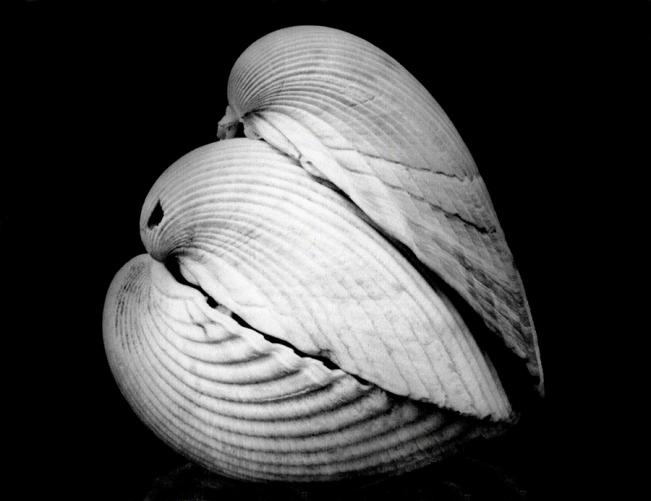 Piggy-Back Shells