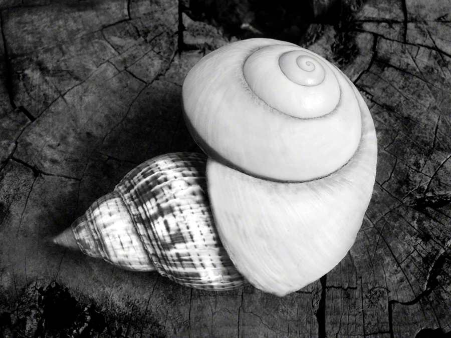 Shell Within A Shell